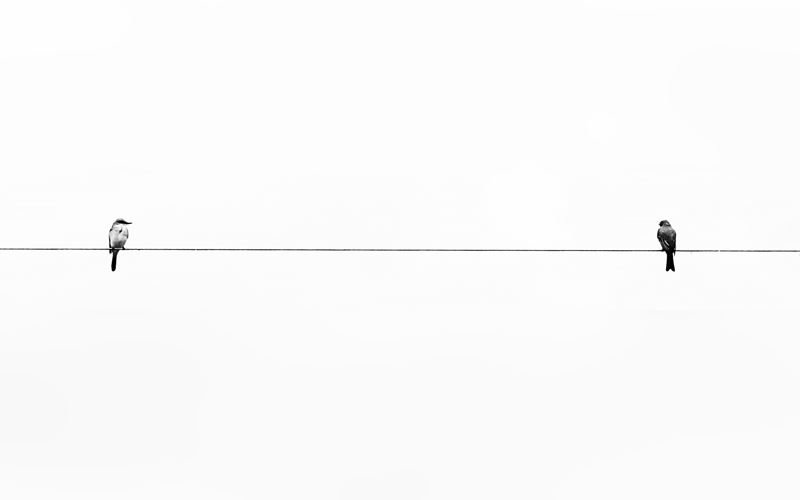 Minimalism 2 Birds On A Wire Wallpapers