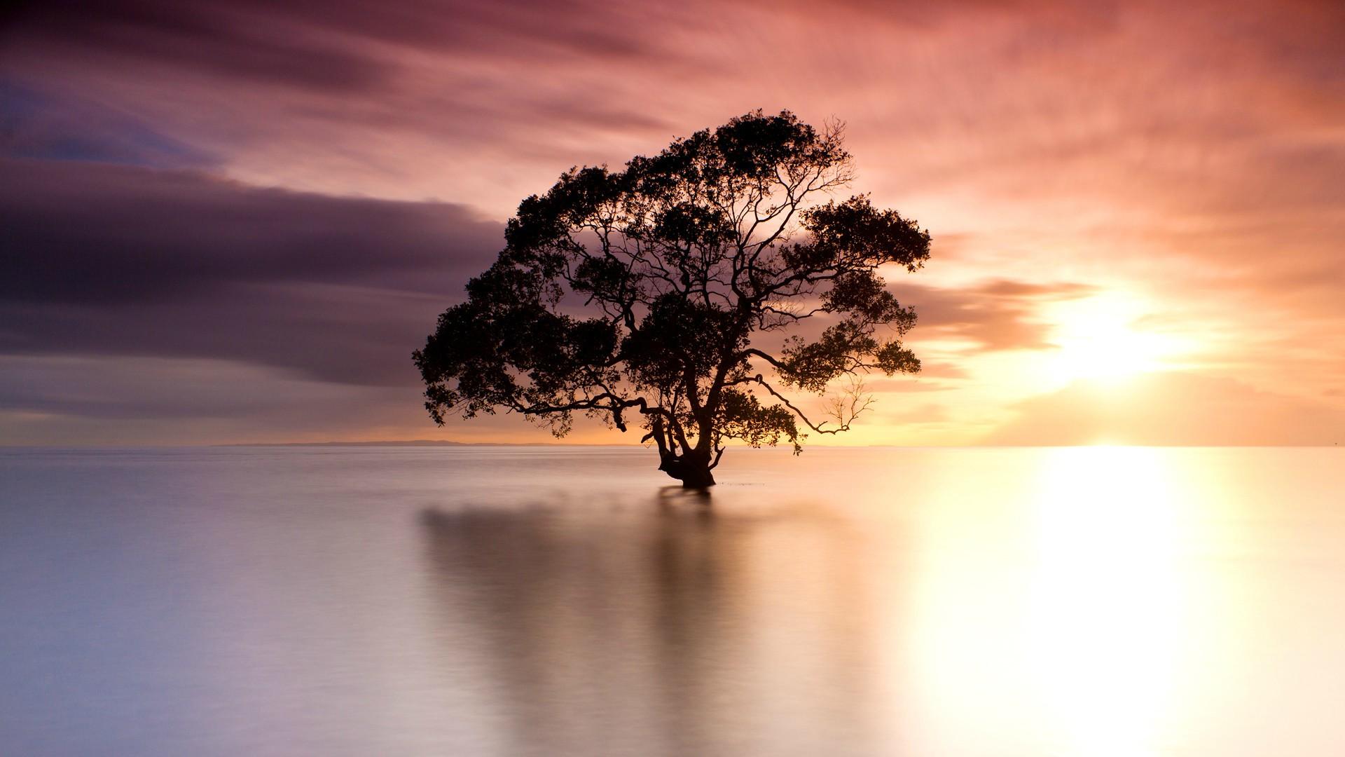рассвет озеро небо дерево смотреть