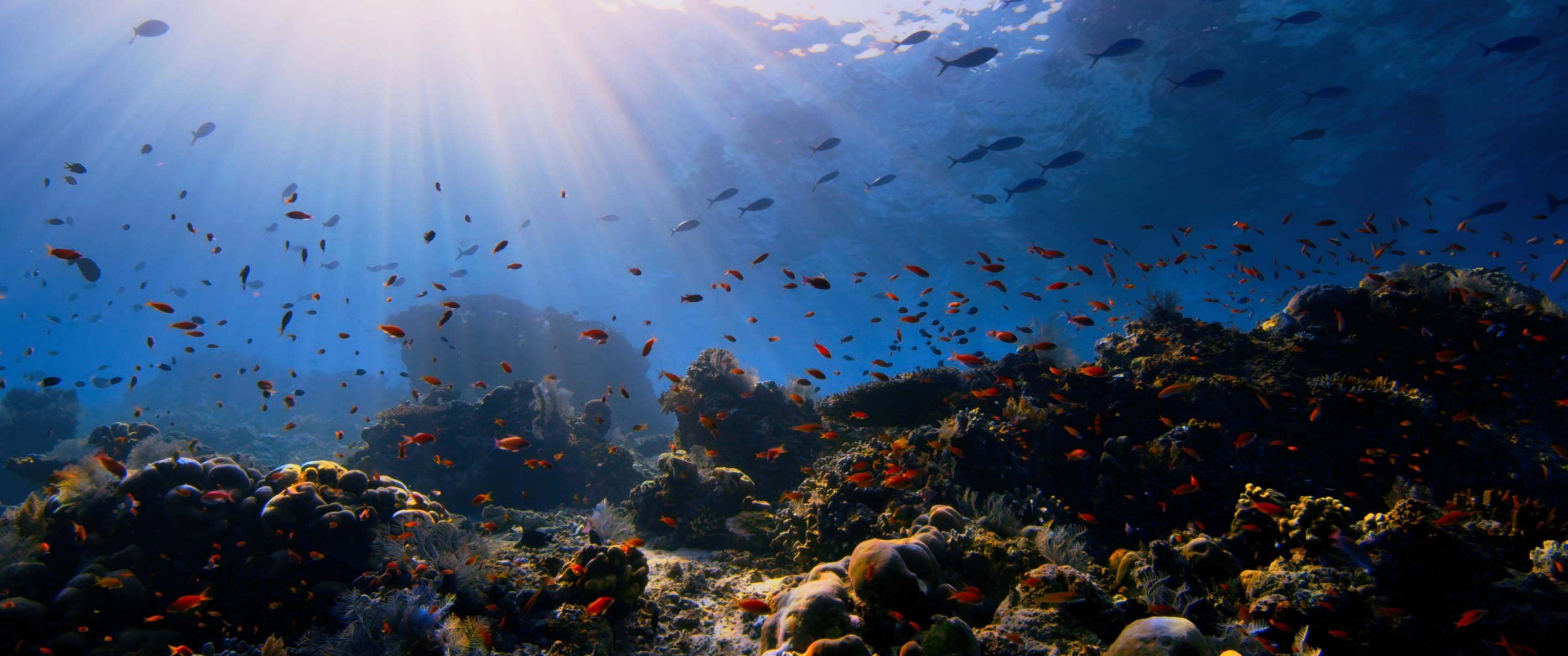 Animal Coral Reef Nature Ocean Outdoors Resized By Ze