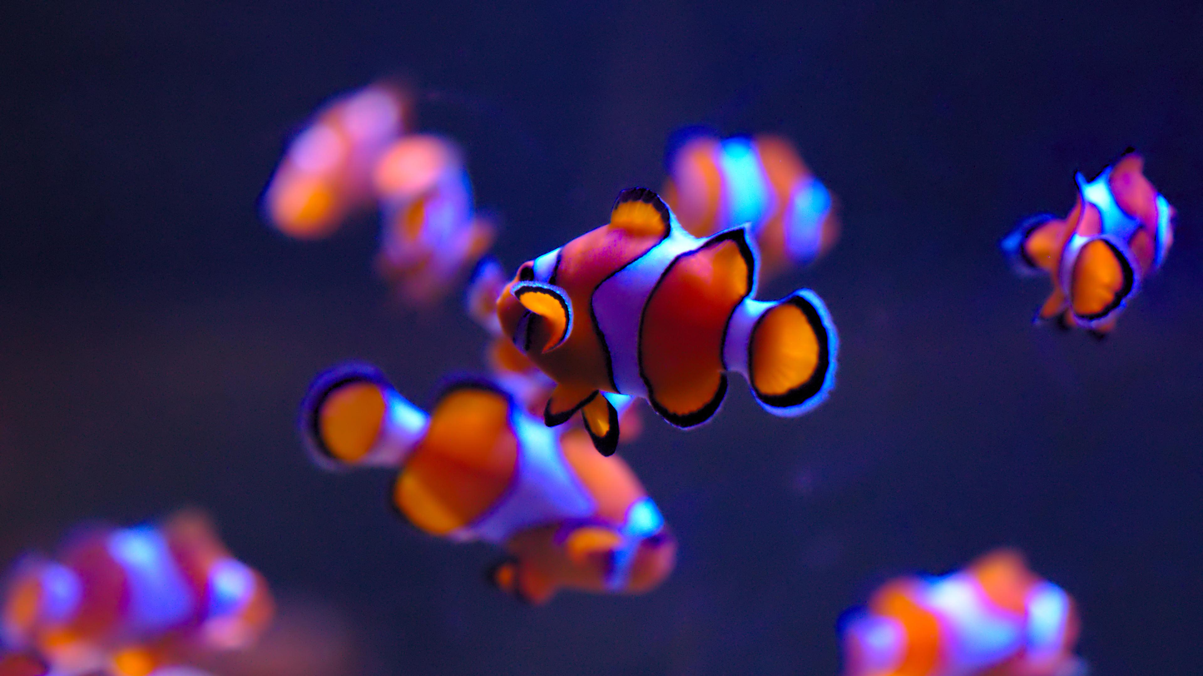 Цветная рыбка загрузить